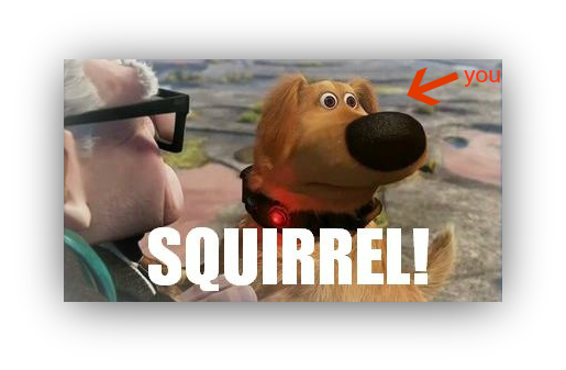 up dog squirrel meme