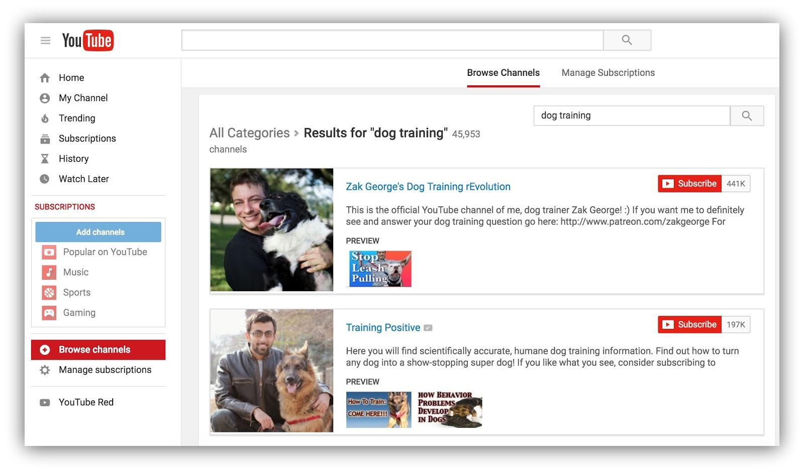 youtube results dog training
